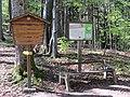 2019-04-25 (145) Nature at Haltgraben, Frankenfels, Austria.jpg