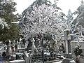 34. Bucuresti, Romania. Din Ciclul BUCURESTIUL SUB ASEDIUL FRIGULUI, Ianuarie 2019. Cimitirul Bellu Catolic. (Cred ca totusi e Primavara).jpg