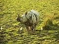 4. I am a Rhino!.jpg