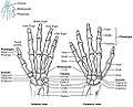 806 Hand and Wrist.jpg