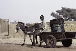 ASC Leiden - F. van der Kraaij Collection - 03 - 033 - Un vendeur d'eau avec une charrette à âne et un baril d'eau - Mossi Plateau, Burkina Faso, 1981.tif