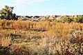 A deer amongst the Autumn foliage in Dinosaur Provincial Park.jpg