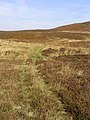 A grass track north of Dryden Fell - geograph.org.uk - 577220.jpg
