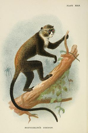 A hand-book to the primates (Plate XXIX) (7047654601).jpg