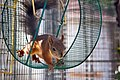 A squirrel in a wheel.jpg