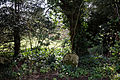 Abbess Roding - St Edmund's Church - Essex England - west churchyard woodland walk 02.jpg