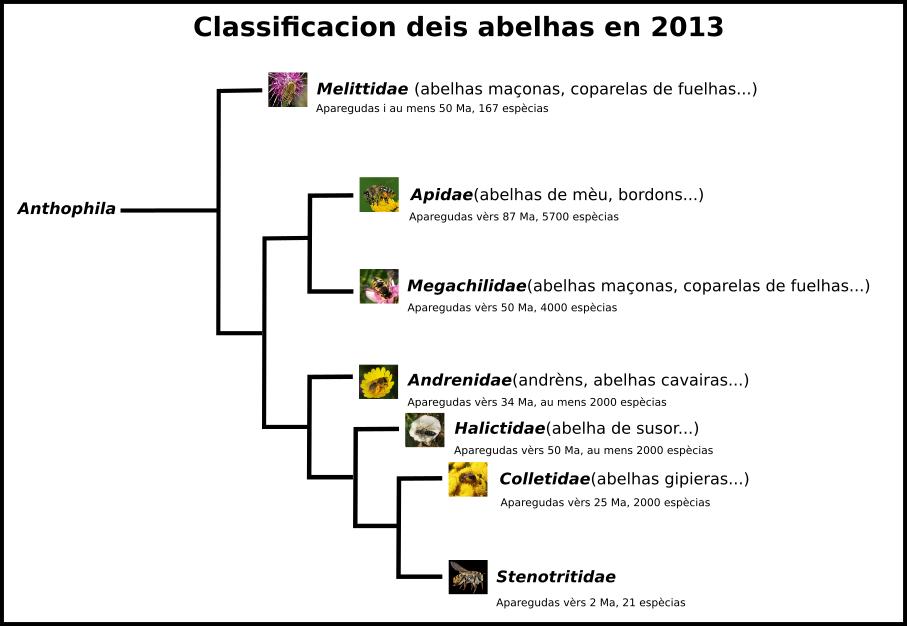 Abelhas - Filogenia 2013