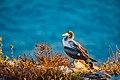 Abrolhos Marine National ParkRobertoCostaPinto09.jpg