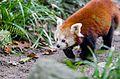 Adorable hunter (22395514532).jpg