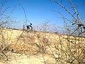 Ahvaz, Khuzestan Province, Iran - panoramio.jpg