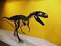 Al·losaure (Allosaurus fragilis), Museu de Ciències Naturals de València.JPG
