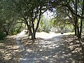 Alafia River SP path03.JPG