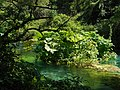 Albania, Bistricë River.jpg