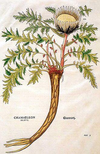De historia stirpium commentarii insignes - Fuchs called this thistle Chamaeleon albus, it is now known as Carlina acaulis.