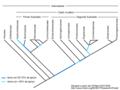 Alismatales-cladograma.png