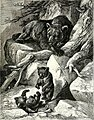 All about animals. Facts, stories and anecdotes (1900) (14591390878).jpg
