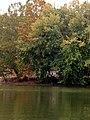Allegheny River Kittanning Fall 2016 - panoramio - Ron Shawley (36).jpg