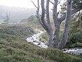 Allt Garbhlach - geograph.org.uk - 268984.jpg