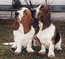 Hush Puppies - Wikipedia, la enciclopedia libre