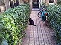 Amsterdam 04 2013 - panoramio.jpg