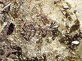 Anatase-Sagenite-Quartz-204060.jpg