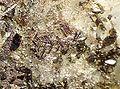 Anatase-Sagenite-Quartz-204060.jpg