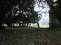 Ancient tree in the churchyard at Empshott - geograph.org.uk - 1099135.jpg
