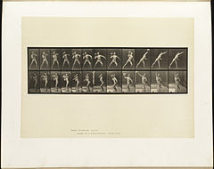 Animal locomotion. Plate 319 (Boston Public Library).jpg