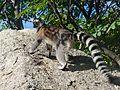 Anja réserve (Madagascar) - 05.JPG