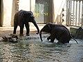 Antwerp Zoo (12210931963).jpg