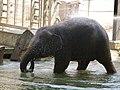 Antwerp Zoo (12211223056).jpg