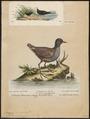 Aramides jamaicensis - 1700-1880 - Print - Iconographia Zoologica - Special Collections University of Amsterdam - UBA01 IZ17500065.tif