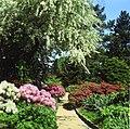 Arboretum Ellerhoop - Zierapfel und Rhododendron.jpg