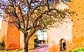 Arbre d'oranger à Rabat prés d'une grande Muraille ancienne de défense.jpg