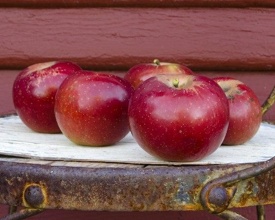 Arkansas Black apples (cropped)