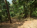 Around Athirappilly Falls during Dec2011 0429.JPG