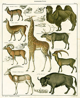Lorenz Oken. Natural History Prints. 1833 г.