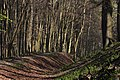 Ashridge Forest.jpg