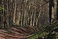Ashridge Forest.jpg