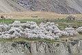 Asqurdas, Nagar, Gilgit-Baltistan, Pakistan (35190801694).jpg