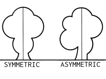 English: line art drawing demonstrating asymme...