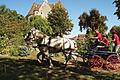 Attelage Percheron Parcour Cl J weber0003 (23975399362).jpg