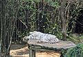Audubon Zoo, New Orleans (8228397983).jpg