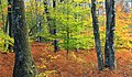 Autumn Forest (2) (22268290172).jpg