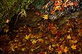 Autumn foliage 2012 (8252575755).jpg