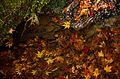Autumn foliage 2012 (8252575755).jpg