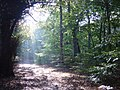 Autumn sunshine in Childwall Woods - geograph.org.uk - 70984.jpg