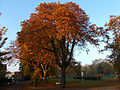 Autumnal Sutton Green, SUTTON, Surrey, Greater London (3).jpg