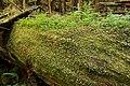 Avatar Grove Nurse Log 3.jpg