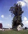 Avebury-124-Steine-Baum-1985-gje.jpg